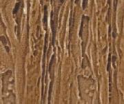 Fatörzs N118 Bronz