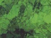 Light Green 121A