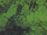 Medium Green 123A